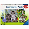 Cuddly Tiger Kittens 3x49 Piece Puzzle