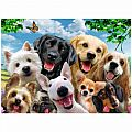 Delighted Dogs 300 Piece Puzzle