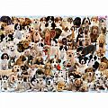 Dogs Galore! 1000 Piece Puzzle